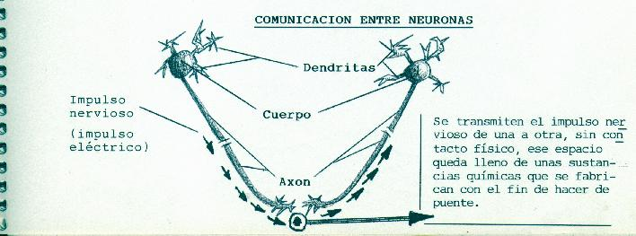 Esquema comunicación entre neuronas